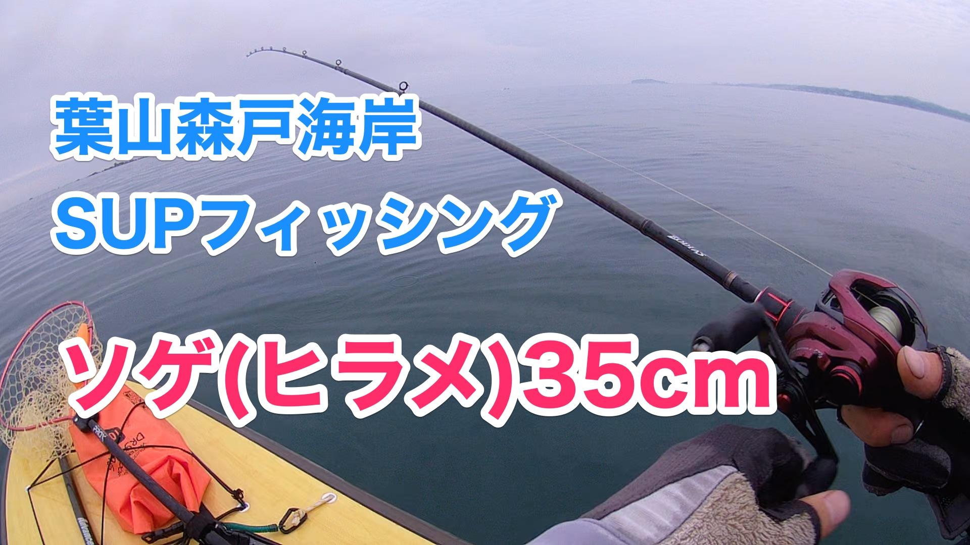 【ヒラメ(ソゲ)35cm】SUPフィッシング@葉山森戸海岸20210515