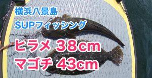 【ヒラメ38cm、マゴチ43cm】SUPフィッシング@横浜八景島20210605