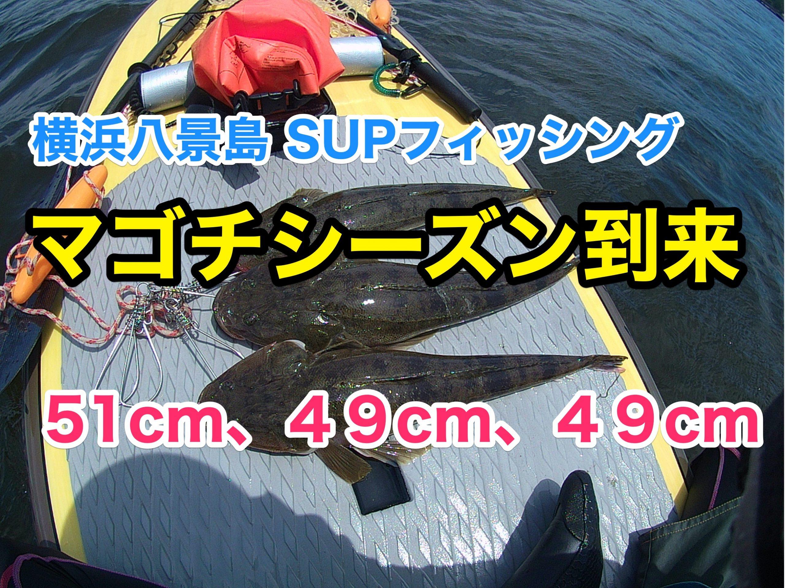 マゴチ51cm、49cm、49cm】SUPフィッシング@横浜八景島20210710