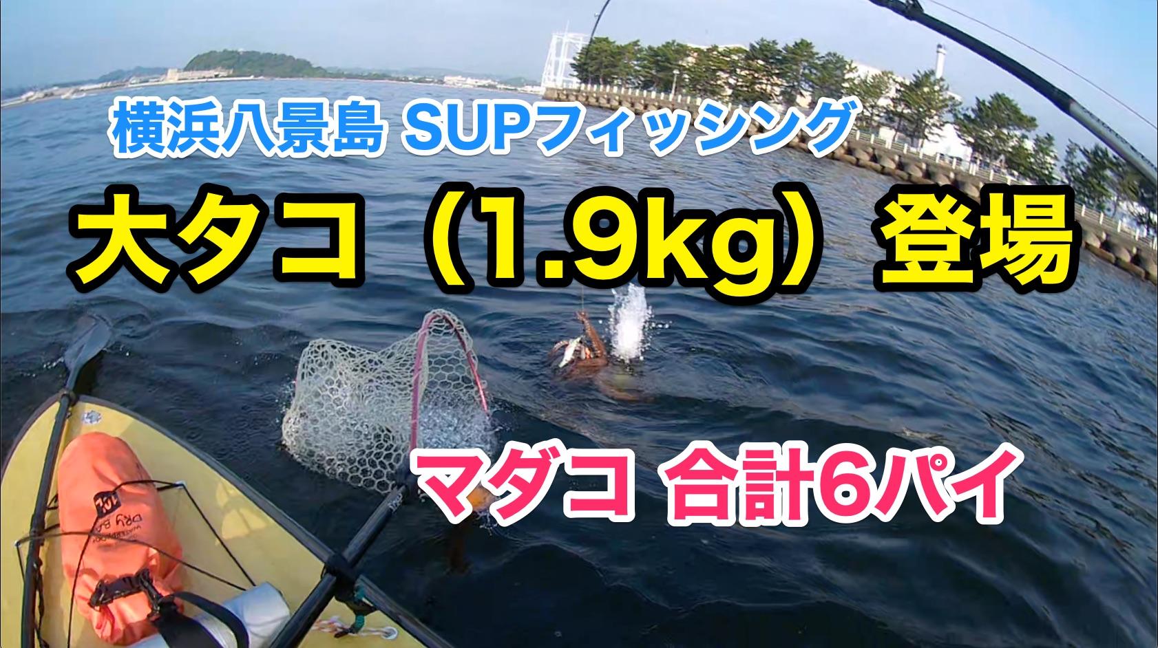 【大タコ1.9kg】SUPフィッシング@横浜八景島20210711