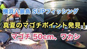 【マゴチ50cm、ワカシ36cm】SUPフィッシング@横浜海の公園20210731